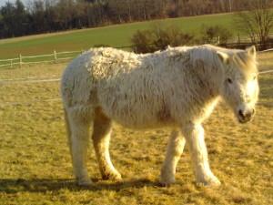 März 2012 war das Fell extrem dick und belastend.